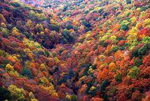 Autumn  / by Gabbie Mitchell