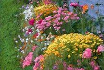 kertvirágai
