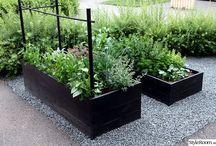 Trädgård - Odla