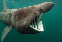 Fotografii subacvatice - Underwater photographer