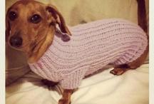 Mia, The Sausage Dog