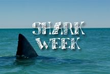 Moore: Shark Week / Celebrate your favorite week in August with some fin-tastic shark crafts! _____/)_____\o/___ / by A.C. Moore Arts & Crafts