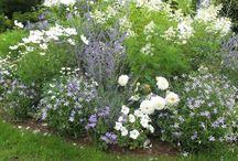 jardin remède