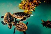 love@turtles
