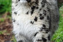 animals big cats