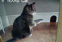 Cats, I love love cats.
