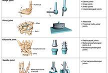 Biomechanika