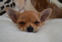 Mathilda / Unser Mathildchen, welche uns inspiriert hat Zubehör für kleine Hunde zu nähen