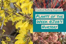 Plants of the Week