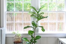 Green Plants at Home