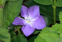 Flora / piante e fiori