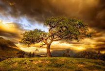 Magnificant Tree Scenes / by Jane Ann Britt