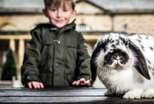 Harewood Farm Experience / Visit Harewood House in Yorkshire for a family day out at the Harewood Farm Experience
