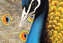 Paon peacock bird oiseaux
