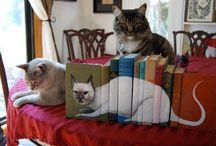 Bookish Felines / by Miranda Hersey