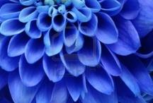 Seldsame blommr