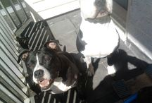 MY DOGS! ❤️