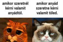 Grumpy cat / Mindenki kedvenc macskája