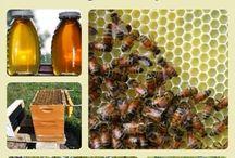 Albine si apicultura