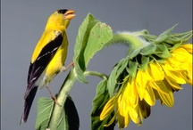 Birds Flowers Animals / by Monica Stickney Brothers