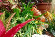 Fall / Alldredge Gardens