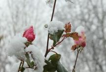 <3 winter