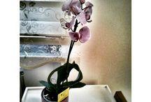 çiçek bakımı / orkideler vebakımı