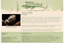 Reptilienhaltung / Handliche Karteikarten mit den Eckdaten zur artgerechten Haltung verschiedener Reptilien, Amphibien, Vogelspinnen und Insekten. Einfach speichern oder ausdrucken. Die Schilder können auch zur Beschriftung von Terrarien verwendet werden. Diese Pinnwand wird kontinuierlich aktualisiert - also folgt uns und bleibt auf dem Laufenden!