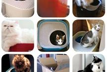 Cats & Cat Stuff / by Mitch Turek
