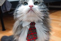 Kitty Pretties,Treats & Pics / Kitties are my fave. Here are kitty treats, ways to dress up your kitties, and of course adorable kitty pics. Who doesn't love cute kitty pics! / by Erin Sales