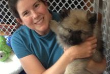 Keeshond Puppy Goodness / My Keeshond puppy Zeke and adorable friends. Also some grown-up pix.