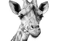 wildlife in pencil n ink.