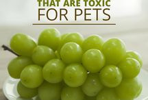 5 People Foods That Are Toxic For Pets