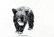 karhunen