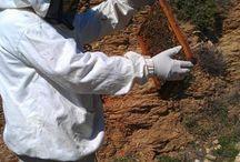 μελισσοκομία_επί τω έργω