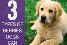 Dog Safe & Unsafe Foods / by Debra Thommen Reynolds