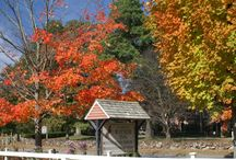 Fall at the Wayside Inn / Showing off the beautiful scenery during Fall at a New England landmark.