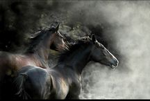Wild Abandon & Gentle Spirit