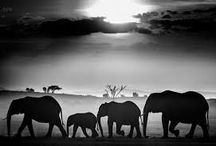 David Yarrow / Pictures