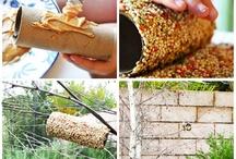 Great ideas