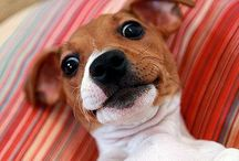 Dodgy Dog selfies that made us laugh