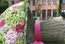 Kwiatowe ciekawostki :)