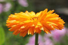 Little Herbs - Plants We Love