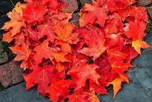 autumn ❤️