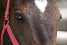 koníčci / moji koně