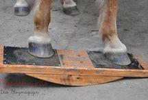 Pferde agility