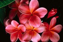 Flowers and Plants / by Jasmine Lettau