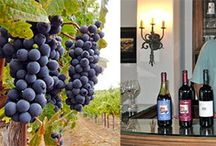 On the Blog / Blog posts from PasoRoblesWineries.net that feature wineries, events, and things to do in Paso Robles Wine Country.