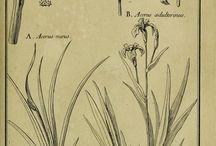 Знаменитые книги с ботаническими иллюстрациями