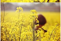 Photography | Canola Fields Inspired